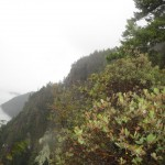 Up Stoneking Mtn trail